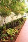 hillcrest11plants_0480